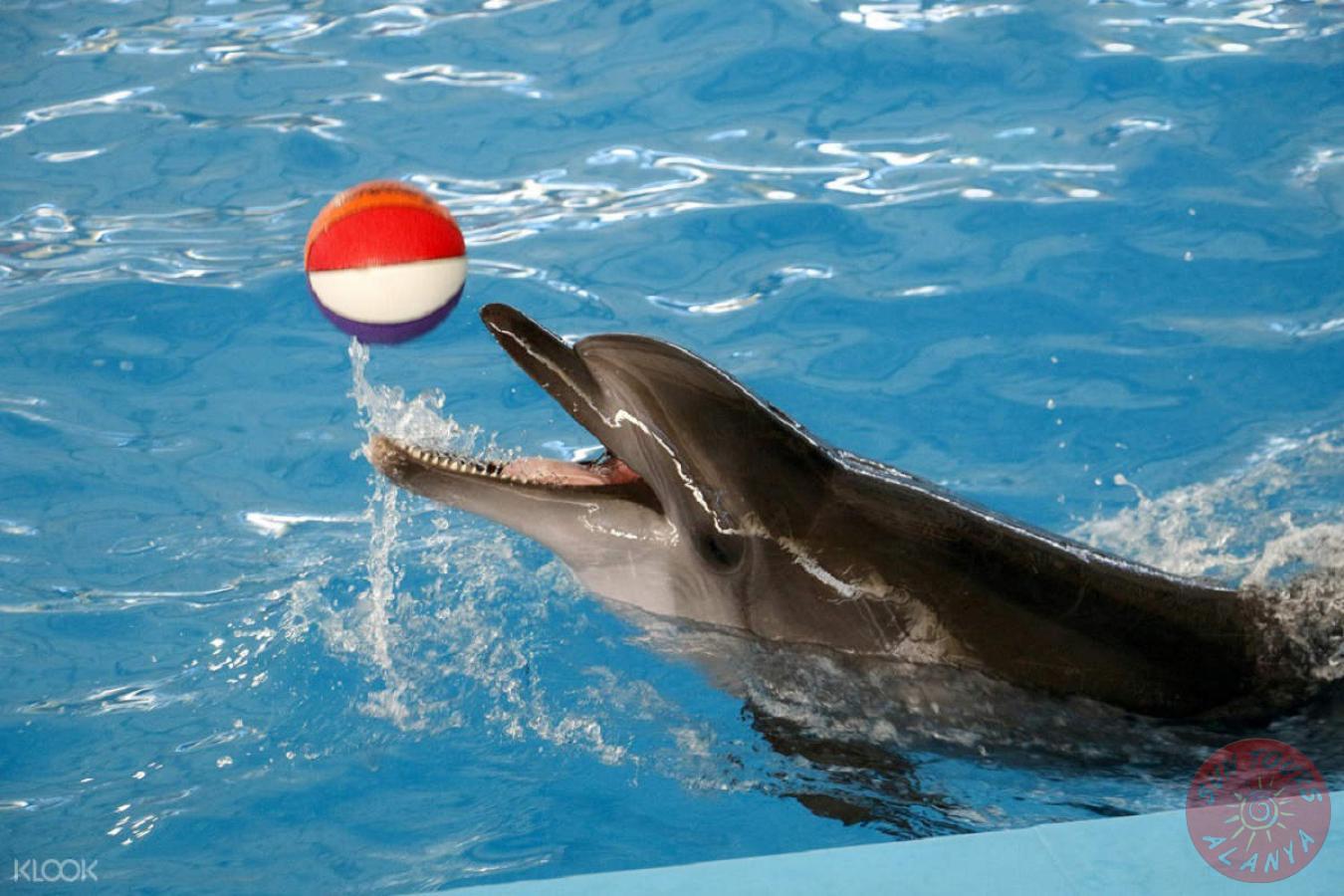 Как попасть в дельфинарий в Алании