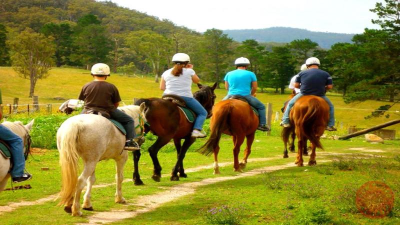 Прогулка на лошадях из Алании