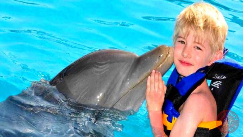 Плавание с дельфинами в Алании